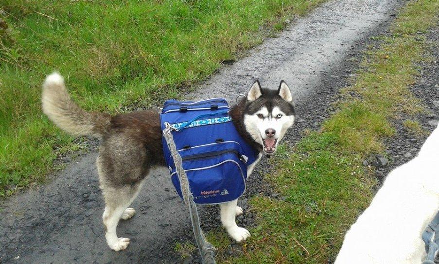darcybackpack